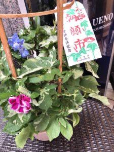 上野浅草界隈のおすすめイベント☆朝顔市